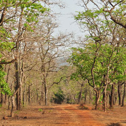 Cotigao Wildlife Sanctuary in Goa City