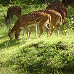 Deer Park in Ludhiana