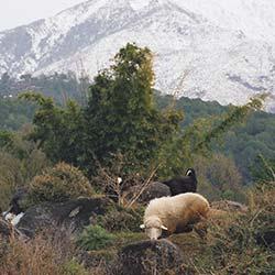 Dhauladhar National Park in Dharamshala