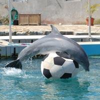 Dolphin Quest Bermuda in Hamilton