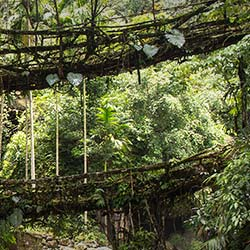 Double Decker Living Root Bridge in Cherrapunji