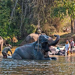 Dubare Elephant Camp in Kodagu