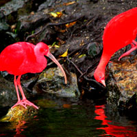 Birds of Eden Bird Sanctuary in Garden Route