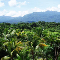 El Yunque Rainforest (Puerto Rico) in San Juan