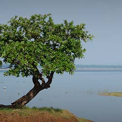 Ekashila Lake & Children Garden in Warangal