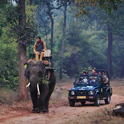 Elephant Safari in Bandhavgarh in Umaria