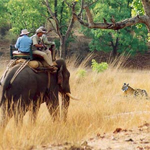 Elephant Safari in Bandhavgarh in Umaria