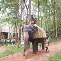 Elephant Safari in Idukki in Idukki
