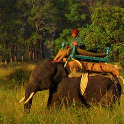 Elephant Safari in Mandla in Mandla
