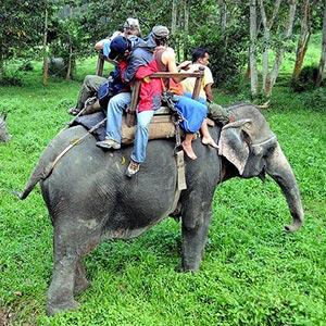 Elephant Safari in Mandla in Mandla