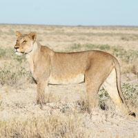 Etosha National Park in Northwestern Namibia