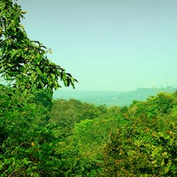 Eturnagaram Wildlife Sanctuary in Warangal