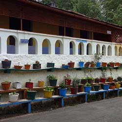 Flora and Fauna Museum in Kodaikanal