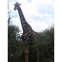 Franklin Reserve in Bloemfontein