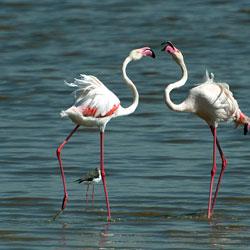Gaga Wildlife Sanctuary in Jamnagar