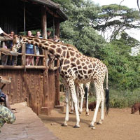 Garissa Community Giraffe Sanctuary in Garissa