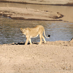Gir Forest National Park in Bharatpur