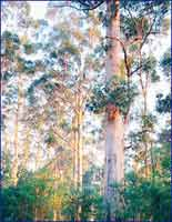 Gloucester National Park in
