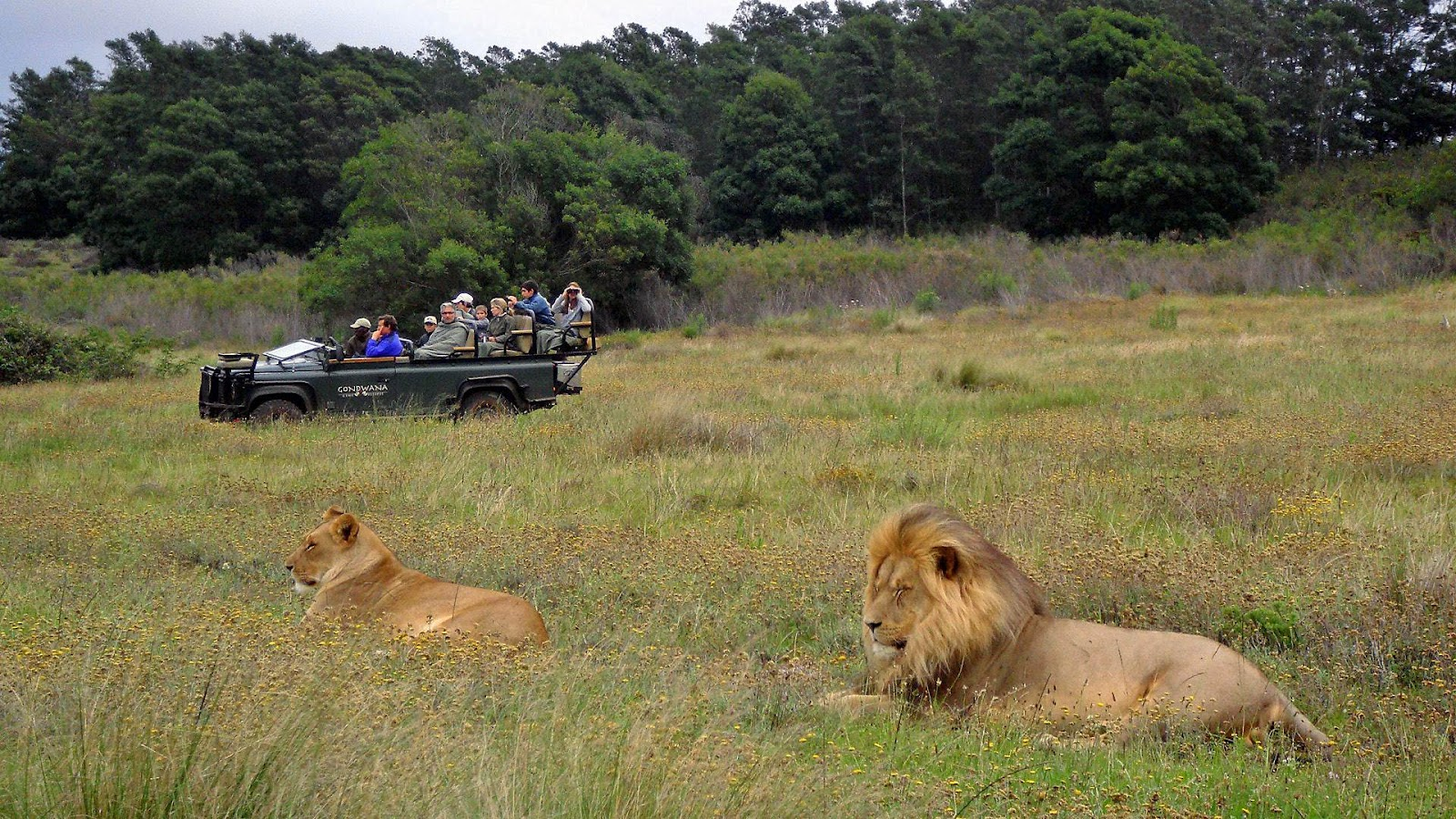Gondwana Private Game Reserve in Garden Route