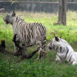 Gopalpur Zoo in Kangra