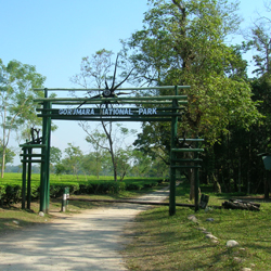 Gorumara National Park in Jalpaiguri