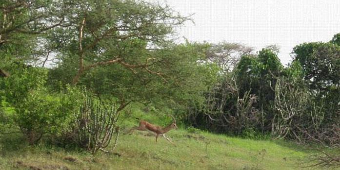 Hingolgadh Nature Education Sanctuary
