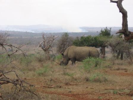 Hluhluwe Umfolozi Park in Kwazulu Natal