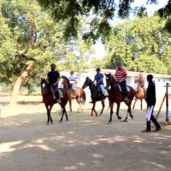Horse Safari in Ahmedabad in Ahmedabad
