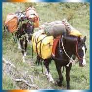 Hurunui Horse Treks in Canterbury
