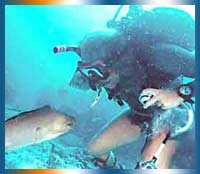 Ibiza Diving in Ibiza