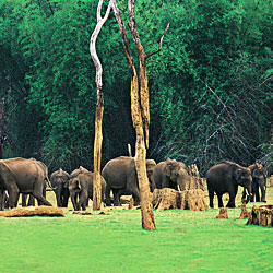 Idukki Wildlife Sanctuary in Idukki