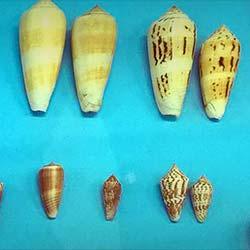 India Seashell Museum in Mahabalipuram
