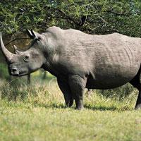Ithala Game Reserve in Kwazulu Natal