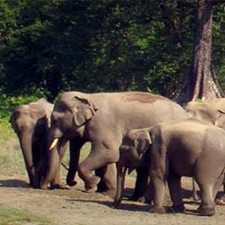 Jaldapara Wildlife Sanctuary in Jalpaiguri