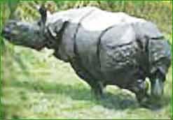 Jaldapara Wildlife Sanctuary in Jalpaiguri
