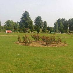 Japanese Garden in Delhi