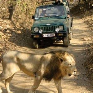 Jeep Safari in Junagadh in Junagadh