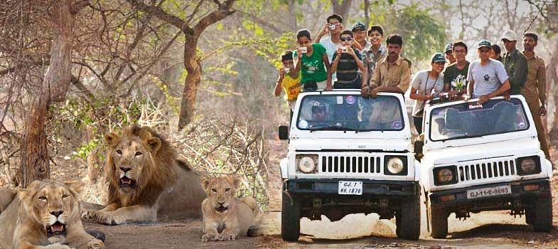 Jeep Safari in Junagadh