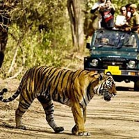 Jeep Safaris in Sariska Wildlife Sanctuary in Sariska
