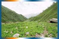 Jungle Trekking in Gajapati in Gajapati