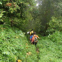 Jungle Trekking in Port Blair in Andaman Nicobar Islands