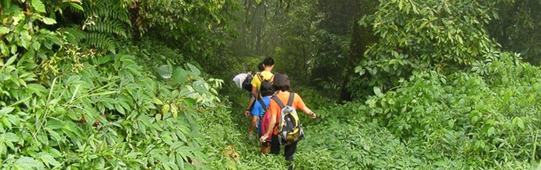 Jungle Trekking in Port Blair