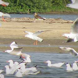 Kadalundi Bird Sanctuary in Kozhikode Calicut