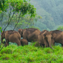 Kalakkadu Wildlife Sanctuary in Tirunelveli