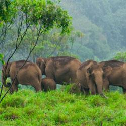 Kalakkadu Wildlife Sanctuary in Tirunelveli