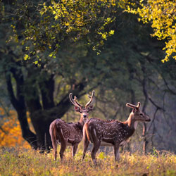 Kanha Kisli National Park in Jabalpur
