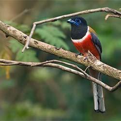 Karnala Bird Sanctuary, Raigad in Raigad