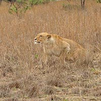 Kasungu National Park in Kasungu