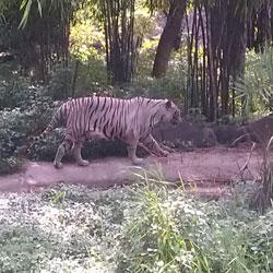 Katraj Snake Park in Pune