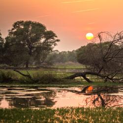 Keoladeo National Park in Bharatpur